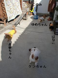 CIMG0330_20100321210356.jpg