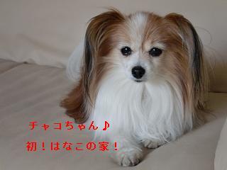 CIMG0346_20100321210843.jpg