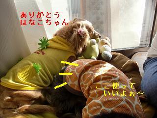 CIMG0351_20100321211528.jpg