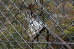 ダム下への階段(封鎖)
