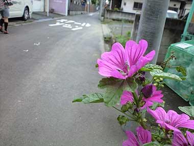 201106181.jpg