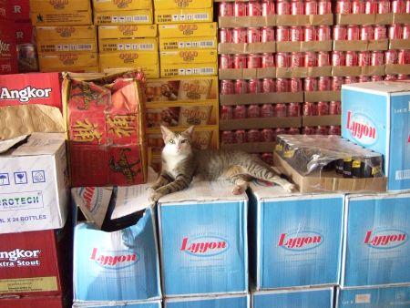 酒屋のネコ