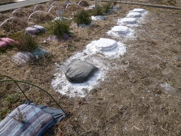 おかむらさきの土のう