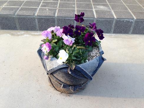 ビオラ_デニム鉢