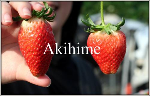 akihime.jpg