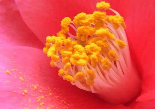 2012.3.9分 日常 お菓子とか、お花!w 7
