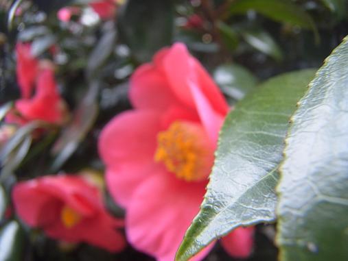 2012.3.9分 日常 お菓子とか、お花!w 6