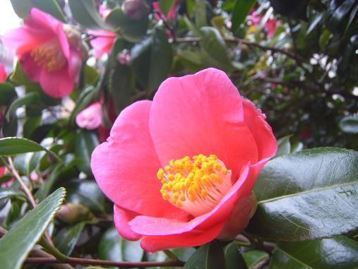 2012.3.9分 日常 お菓子とか、お花!w 4