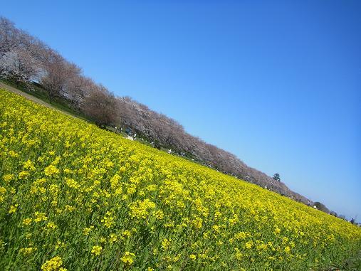 2012.4.12分 日曜日お花見日和 ①午前の部 裏22