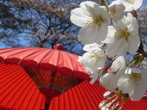 2012.4.12分 日曜日お花見日和 ①午前の部 裏20