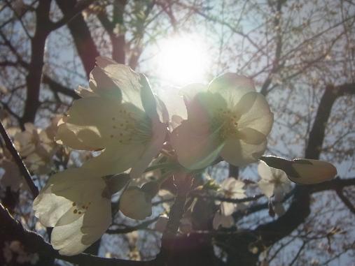 2012.4.12分 日曜日お花見日和 ①午前の部 裏19
