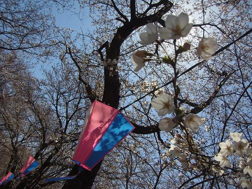 2012.4.12分 日曜日お花見日和 ①午前の部 裏17