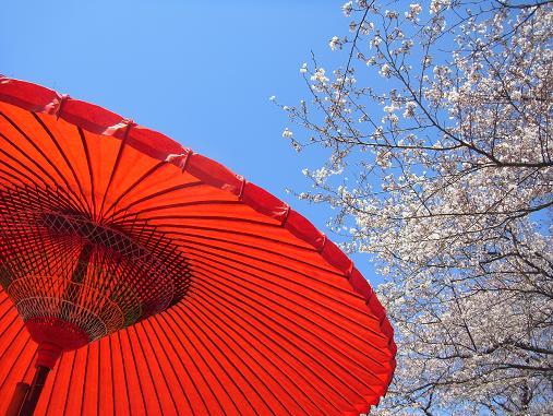 2012.4.12分 日曜日お花見日和 ①午前の部 10