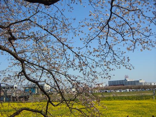 2012.4.12分 日曜日お花見日和 ①午前の部 9