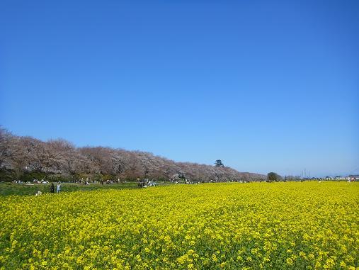 2012.4.12分 日曜日お花見日和 ①午前の部 1