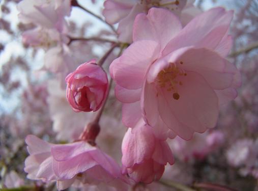 2012.4.20分 日常 この間の、お花見2nd 8