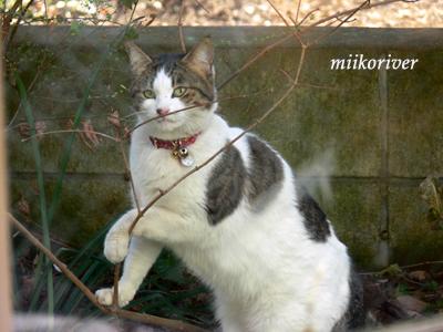 houmonneko20100201.jpg