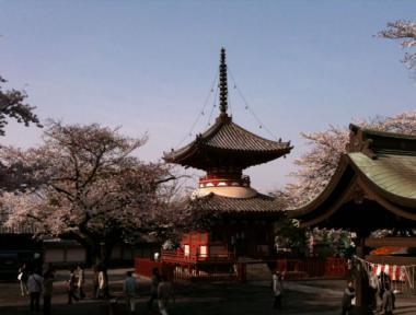 喜多院桜3