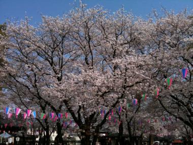 喜多院桜2