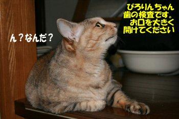 ネコの歯医者さん1
