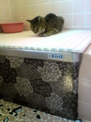 ニャン お風呂のふたの上