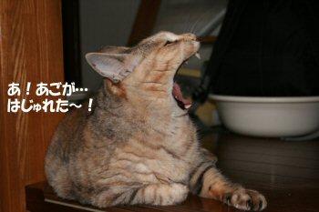 ネコの歯医者さん4