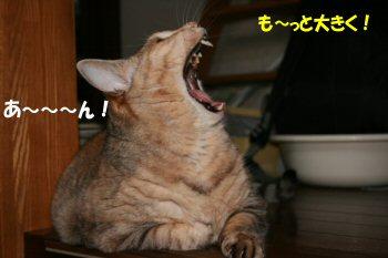 ネコの歯医者さん3