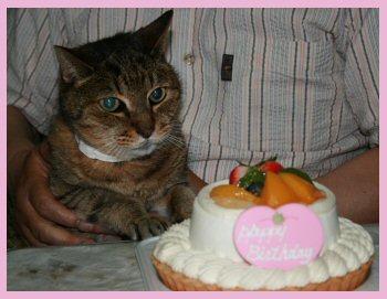 にゃんとケーキ