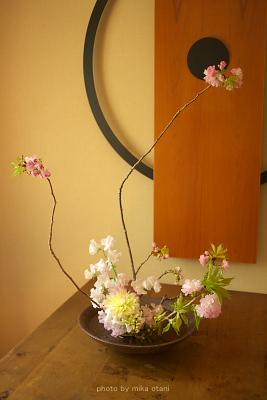 sakura lesson1
