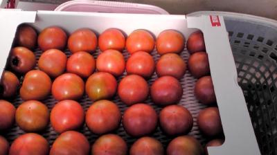 2011-0107-tomato_convert_20110107144137.jpg