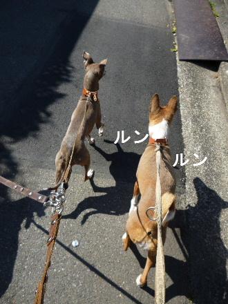 2012_0327ナッキー0051