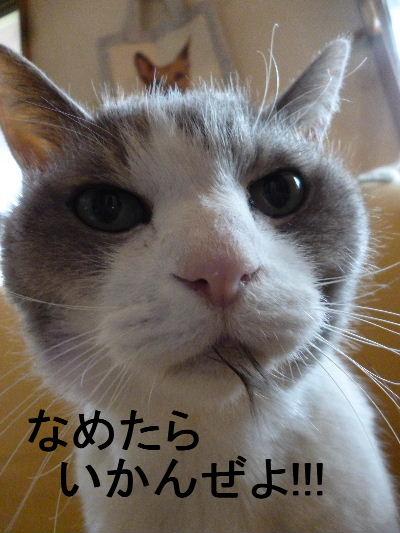2012_0409f0004.jpg