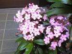 町で見かけた花シリーズhana09341