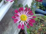 町で見かけた花シリーズhana09342