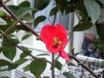 町で見かけた花シリーズ09355