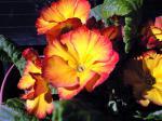 町で見かけた花シリーズhana09362