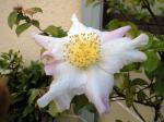 町で見かけた花シリーズhana09363