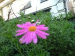 花シリーズ10011