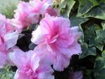花シリーズ10352