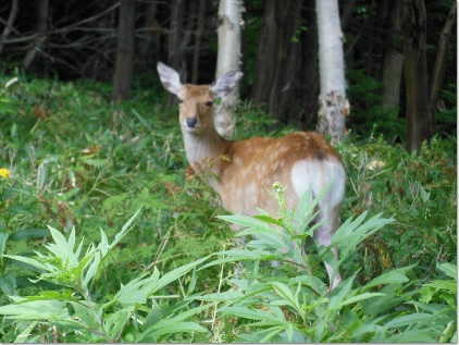 見返り鹿さん