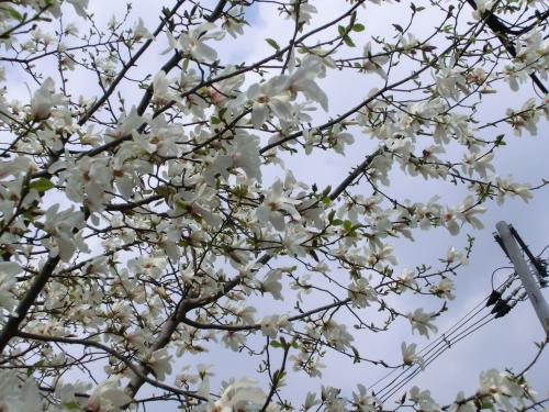 桜204053