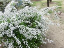 桜204052