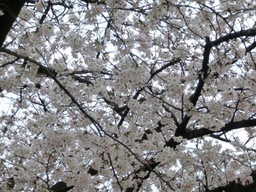 桜204051