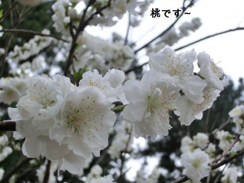 桜204104
