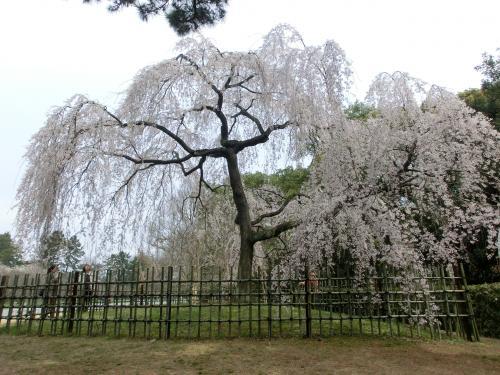 桜204102