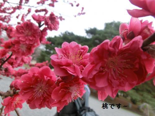 桜204103