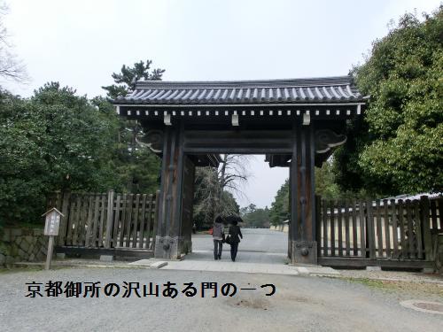 桜204101