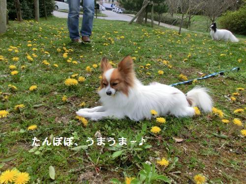 彦根オフ204164