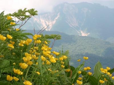 20110715ミヤマキンポウゲと三方崩山