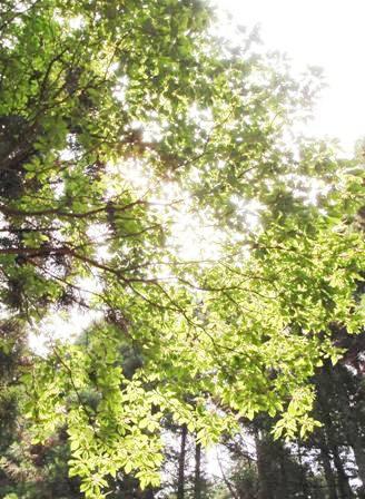 20110731-06赤猿峠木漏れ日
